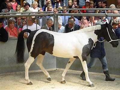 dumfries horse sale horse sale 400x300