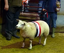 champion lamb
